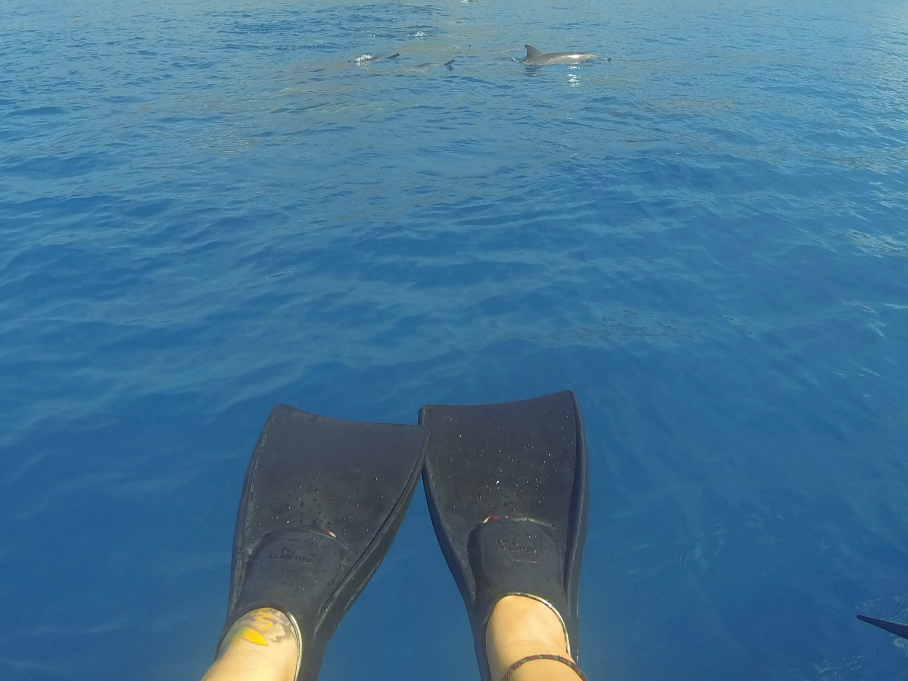 dolphin excursion Hawaii. Swim with dolphins hawaii